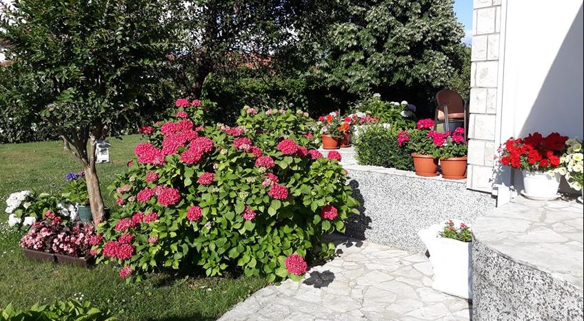 Photo of KONKURS ZA NAJLJEPŠE PG BALKONE I BAŠTE: Pogledajte predivnu baštu Svetlane Fatić u Donjoj Gorici (FOTO)