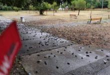 Photo of TUŽAN PRIZOR U PODGORIČKOM NASELJU: Uginuo veliki broj vrabaca zbog posljedica nevremena
