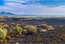 Photo of CZIP: Požar na Skadarskom jezeru trajao skoro pet dana
