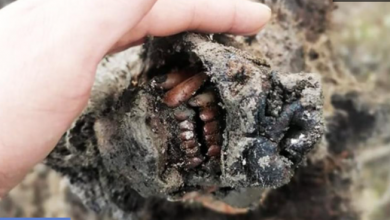 Photo of NEVJEROVATNO OTKRIĆE: Pronađen očuvan medvjed iz LEDENOG DOBA