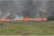 Photo of DRAMATIČNO: Veliki požar sa Žabljaka Crnojevića stigao do Dodoša