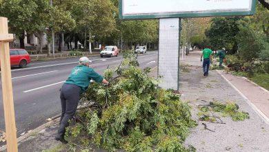 Photo of NEVRIJEME U PODGORICI: Oborena stabla, oštećeni automobili, ekipe Zelenila na terenu (FOTO)