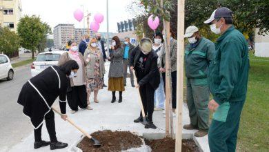 Photo of PODGORICA: Sadnjom kestena obilježena globalna kampanja mjeseca borbe protiv karcinoma dojke