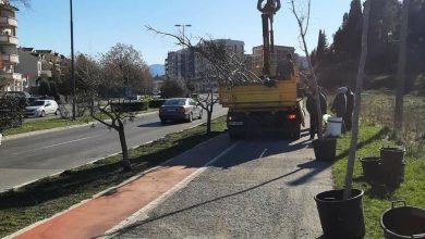Photo of Bulevar Crnogorskih serdara dobija novi drvored od 47 stabala košćela